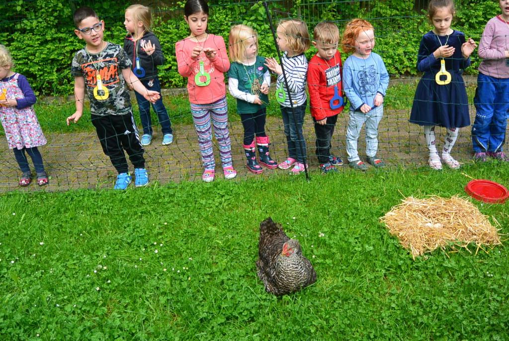 Huhn in der Kita